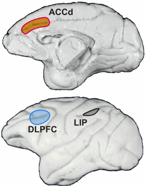 Monkey Brain!